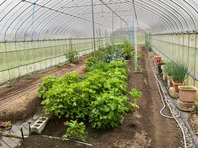 野菜も育ててます