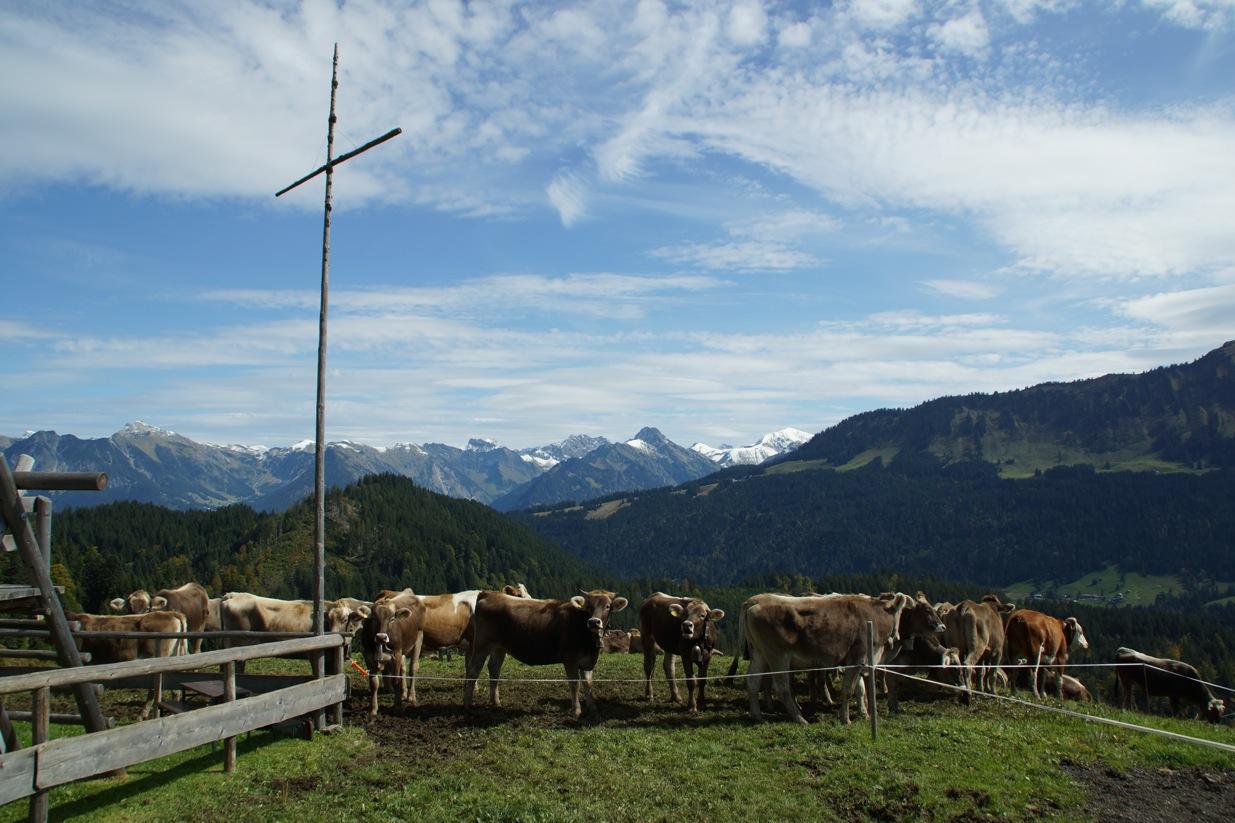 Alpe Osterberg – Viehscheid 2017