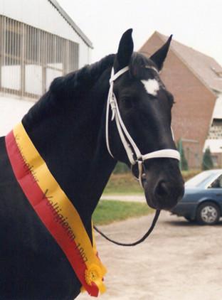 Gorbi (Gorbatschow), ging bis 1999 Volti