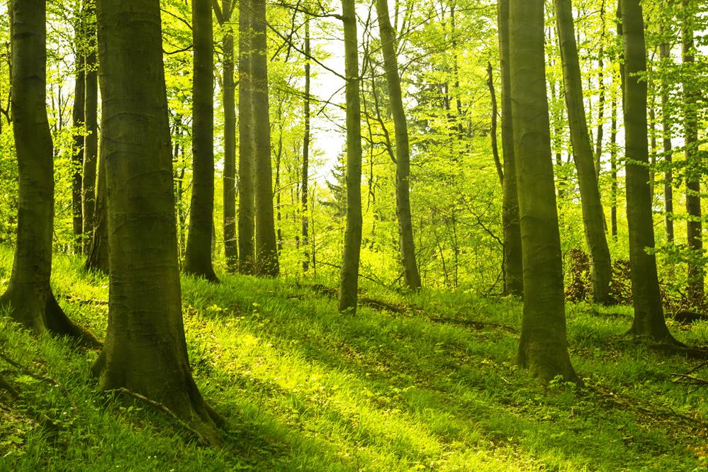 Waldbestattung/ Baumbestattung