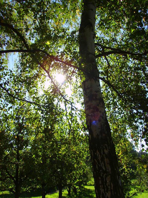 Herbstwald vor der Blätterfärbung