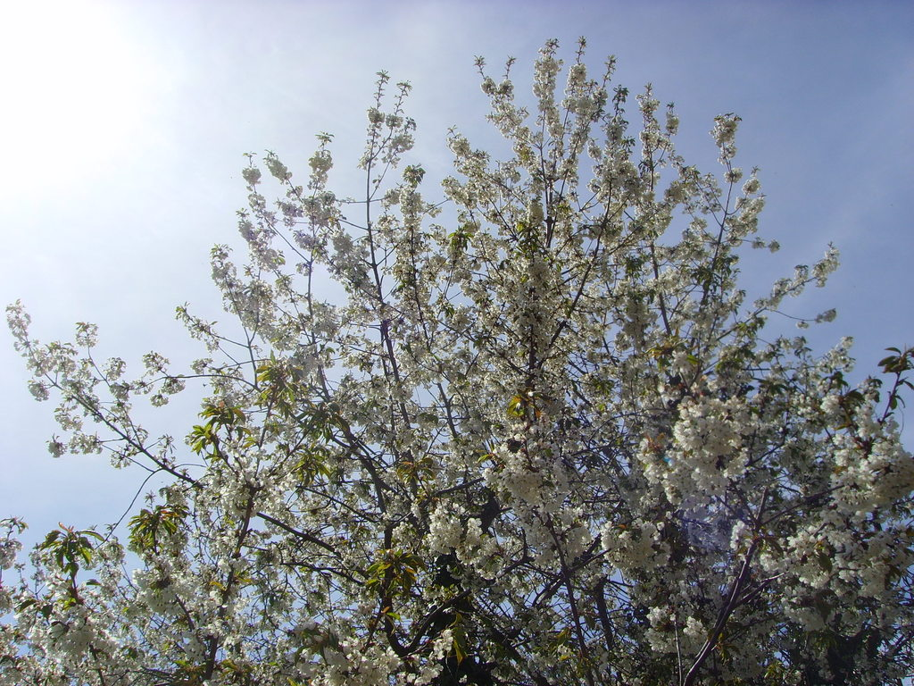 Erste Frühlingsblüten zeigen eine wundervolle Pracht