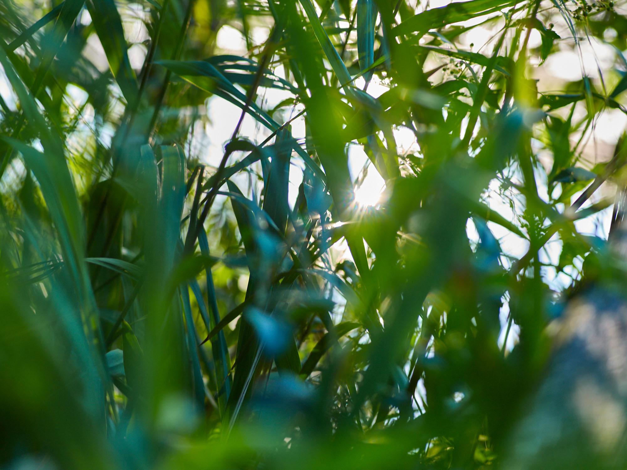 Gras mit Sonne