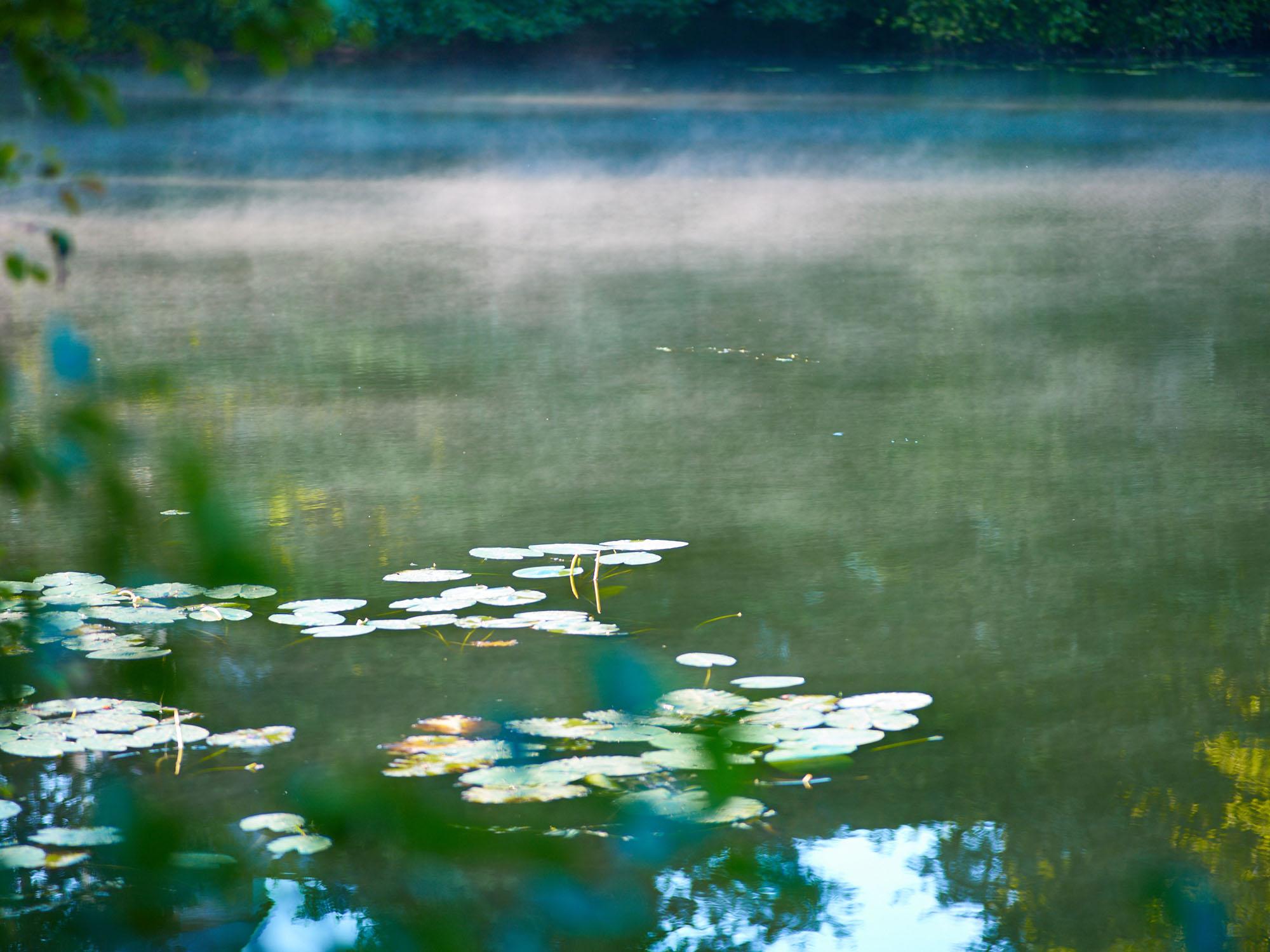 Nebel am Höglwörther See