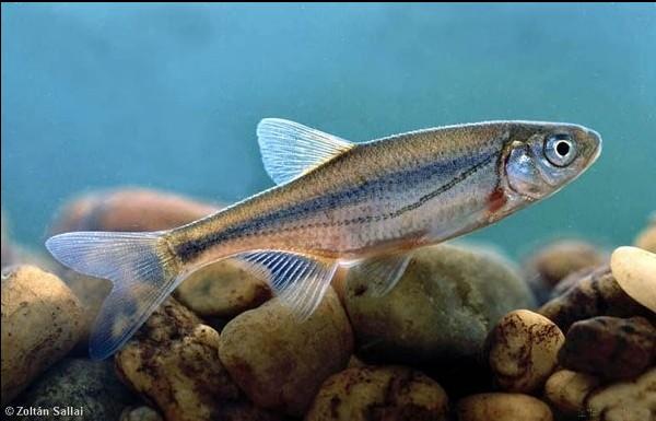 Photo © Zoltan Sallai www.carpathianbasinspecies.eu