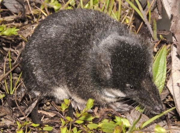 Photo © Tamás Cserkész www.carpathianbasinspecies.eu