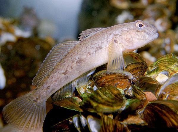 Photo © Eric Engbretson, U.S. Fish and Wildlife Service / Wikimedia Commons. Public domain