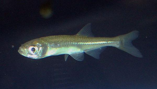 Photo © Karelj / Wikimedia Commons. Public domain