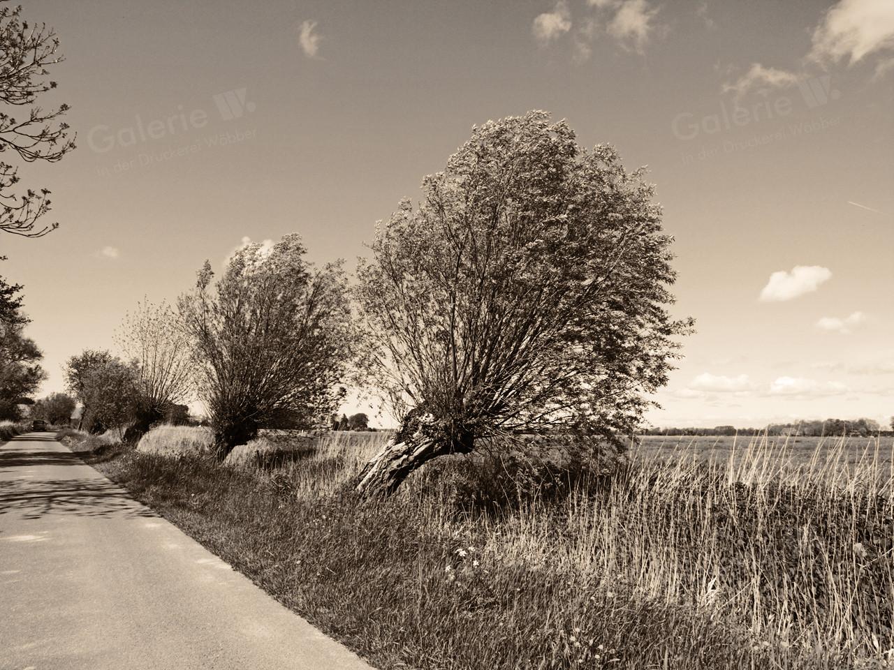 106016 Wurster Land
