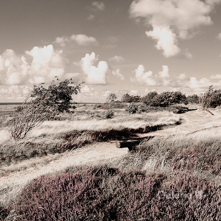 44142 Duhner Heide