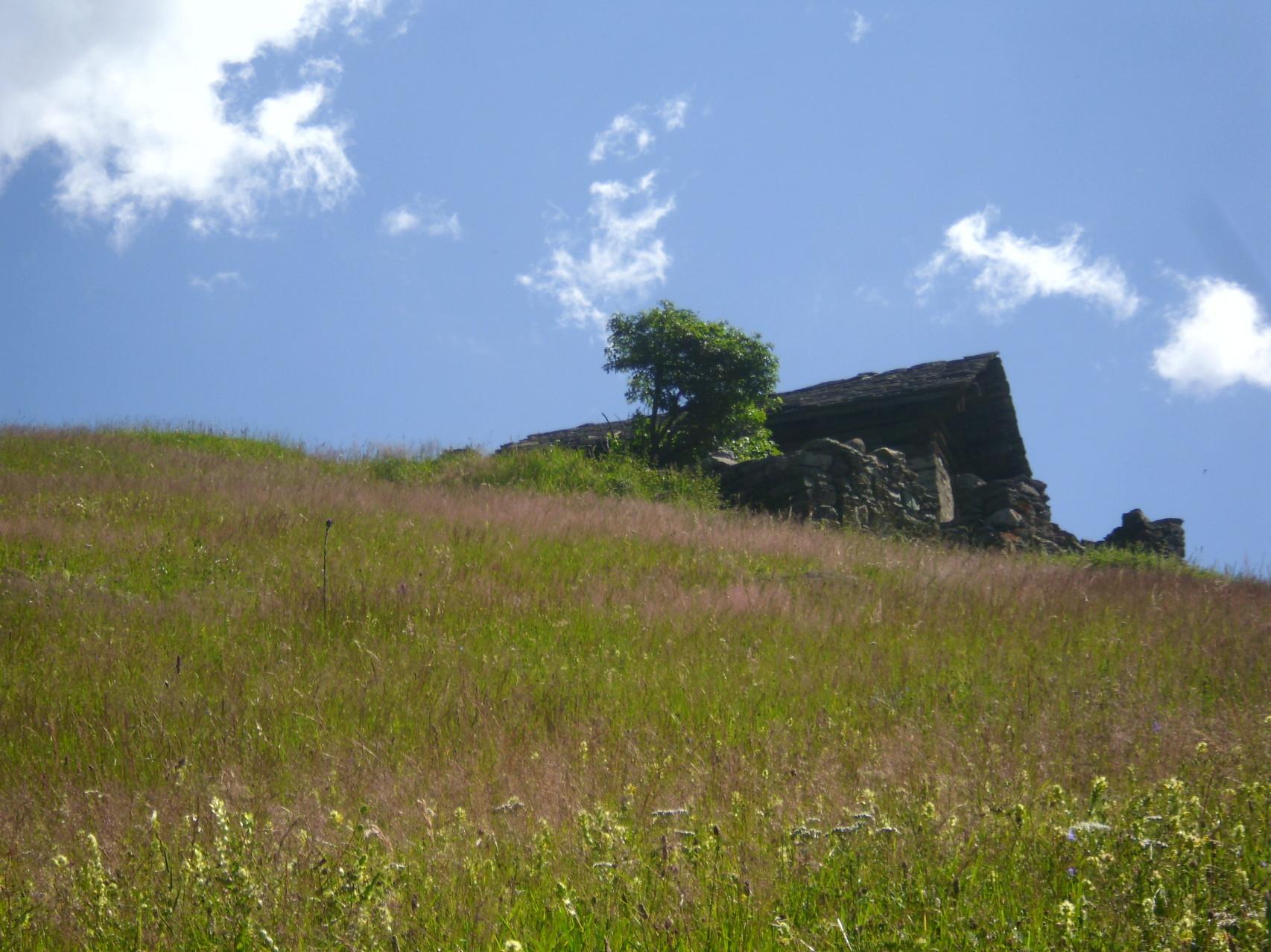 Auf der Alp gibt es einige Hütten, die teilweise bewohnt sind. Man sieht aber kaum je einen Menschen dort.