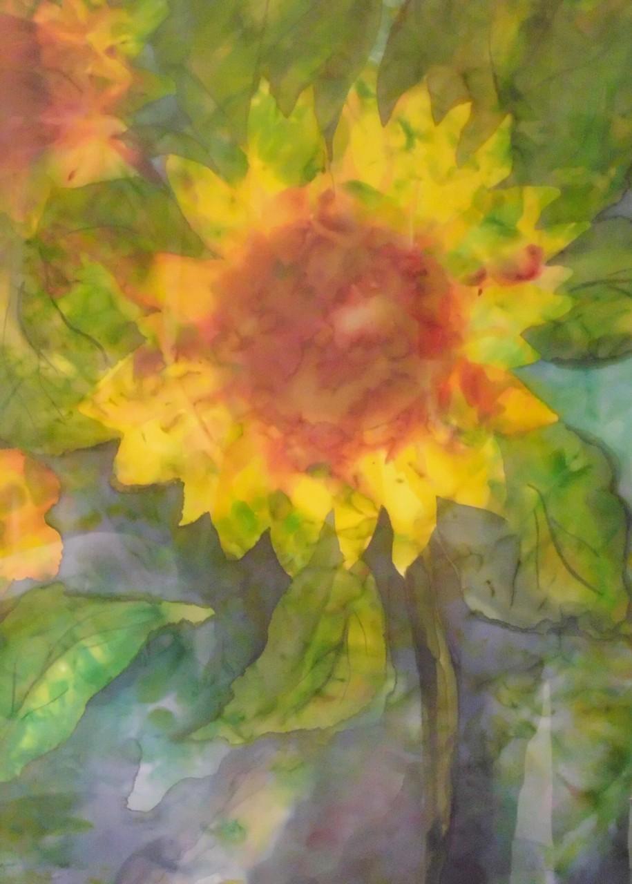 Sonnenstrahlenblüte