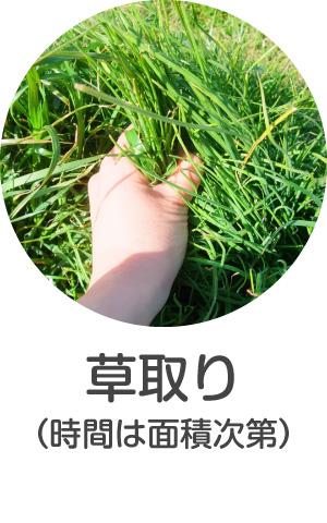 お庭の草取り・草むしり