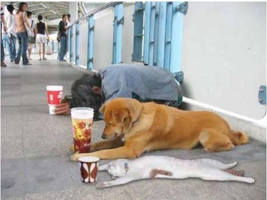 En la crisis económica hasta las mascotas deben aportar. El gato en ese caso, se pasó de tono.