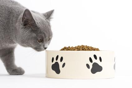 Futterumstellung Katze