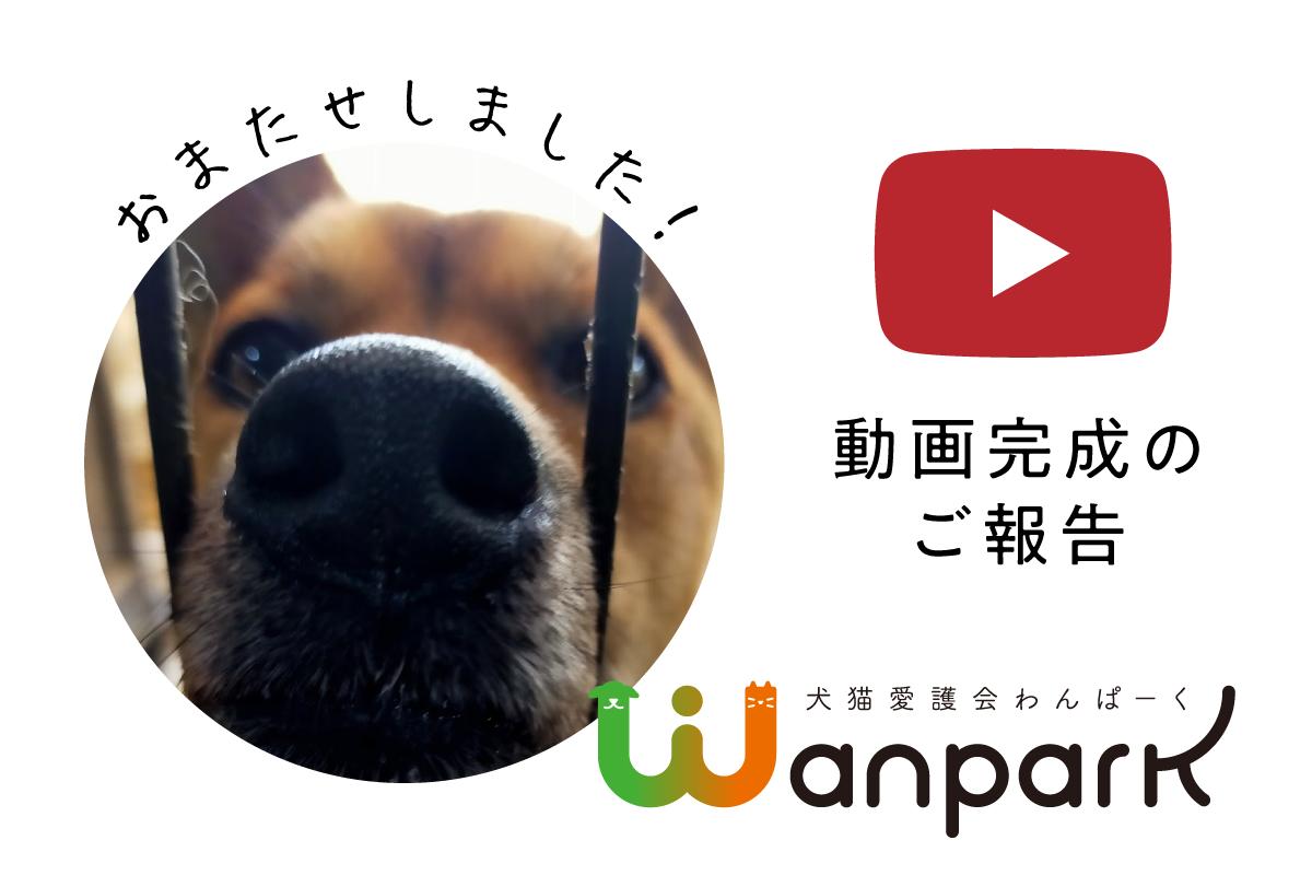[ついに!]動画完成のご報告[公開!]