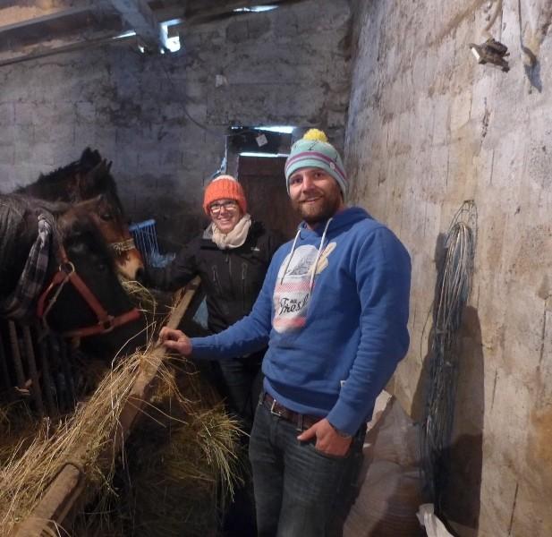 Holzrückepferde in ihrem Stall