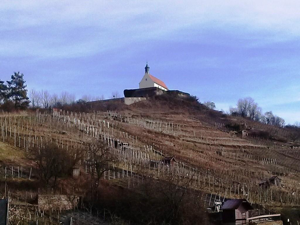 auf dem Weinbaulehrpfad