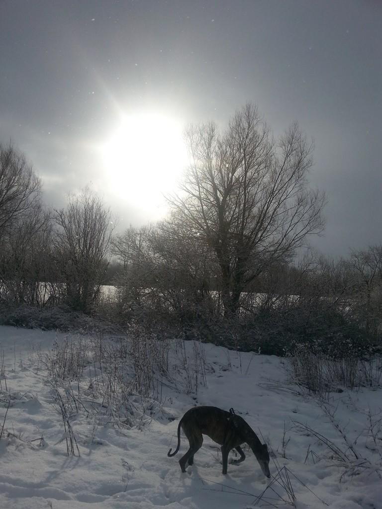Khelo der Wintersonnenhund