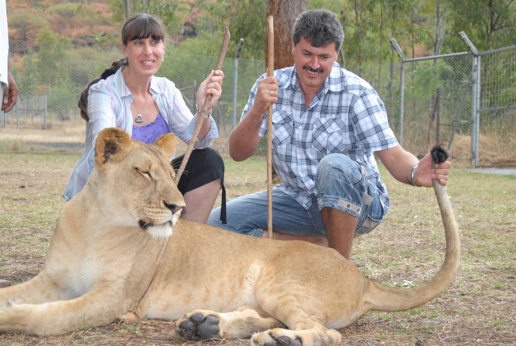 Auch das gibt es auf Mauritius - Hautnah mit Löwen im Käfig oder beim Spaziergang
