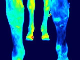 Unterversorgung - Kältemuster im linken Vorderbein
