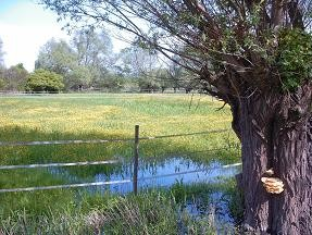 Feuchte Wiesen - Lebensgrundlage für den Weißstorch