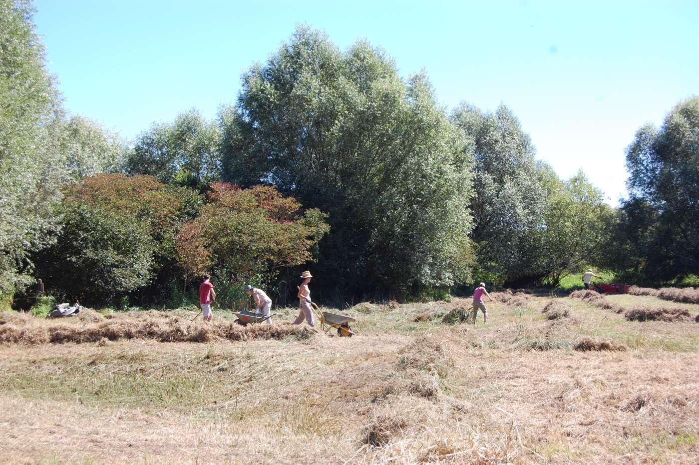Biotoppflegeeinsatz auf einer Feuchtwiese mit freiwilligen Helfern