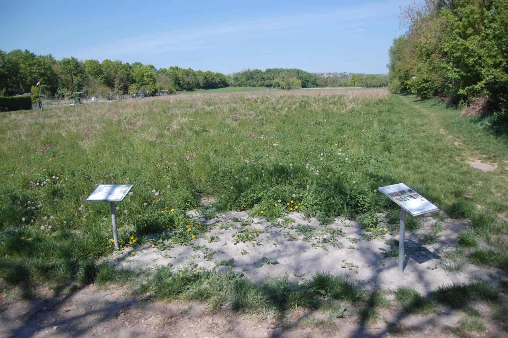 Sandfläche für Wildbienen, 2020