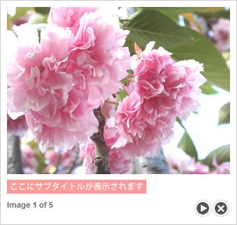 写真の表示画面
