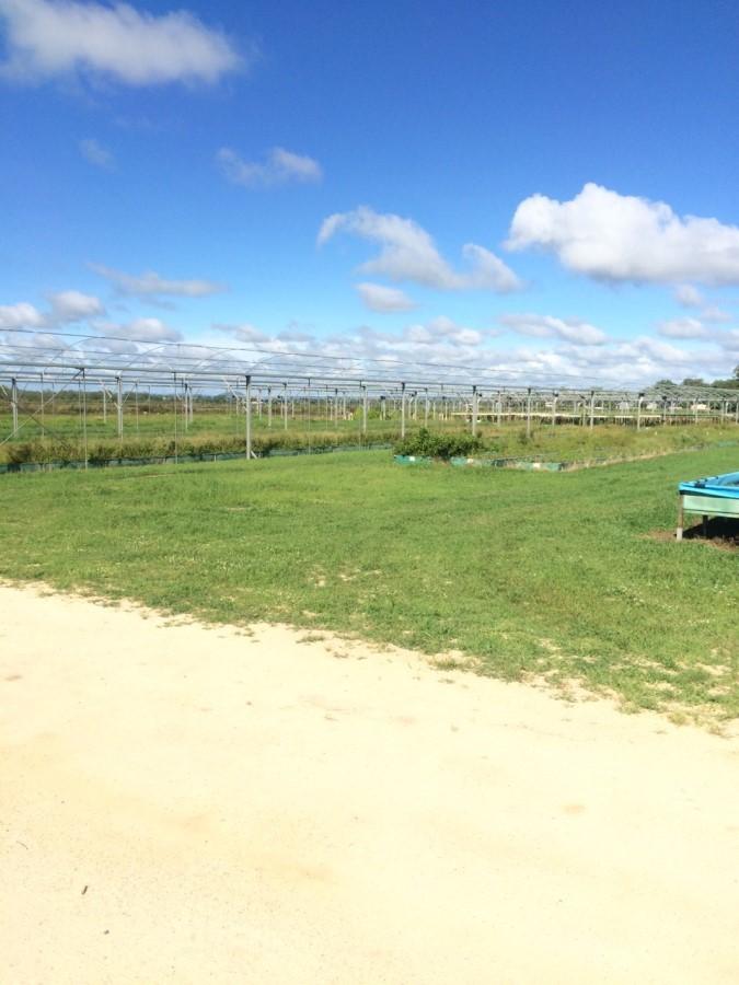マリーバ ハーブファーム 一面に広がるハーブ畑