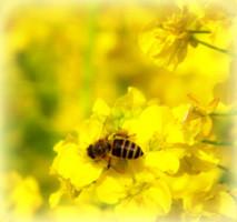 蜂蜜のダイエット効果―はちみつの栄養効果