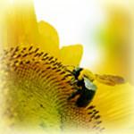 蜂蜜の美容効果―はちみつの栄養効果