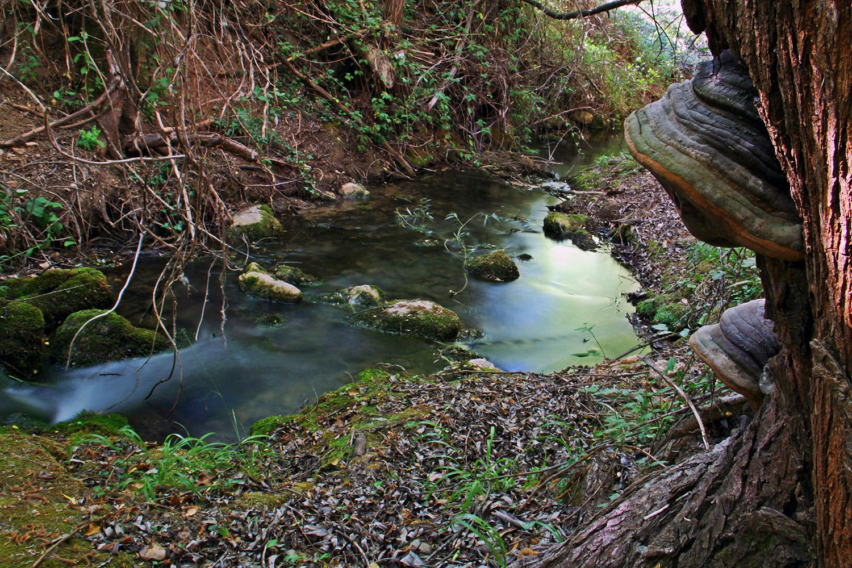 """Green River"" - PN Sierra de Huétor, Granada - R07981"