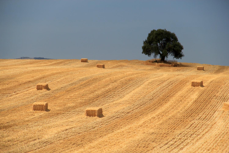 """The Hay Bales"" - Fuensanta, Granada - LS01387"