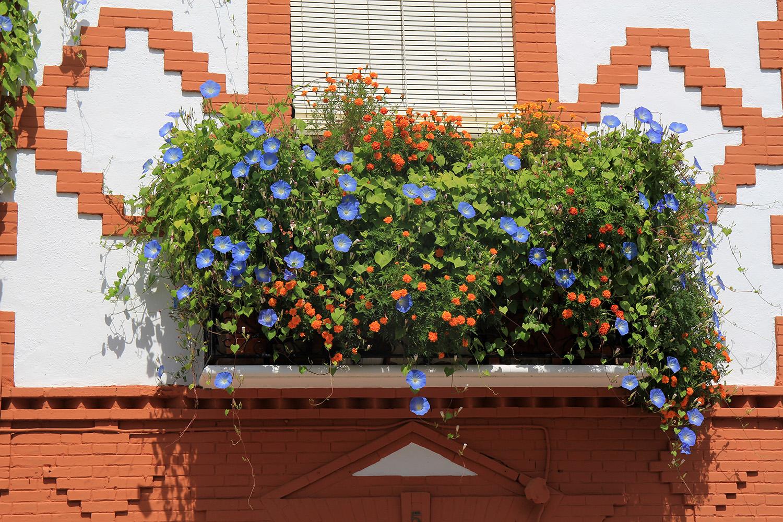 """Gor"" - Guadix, Granada - V05123"