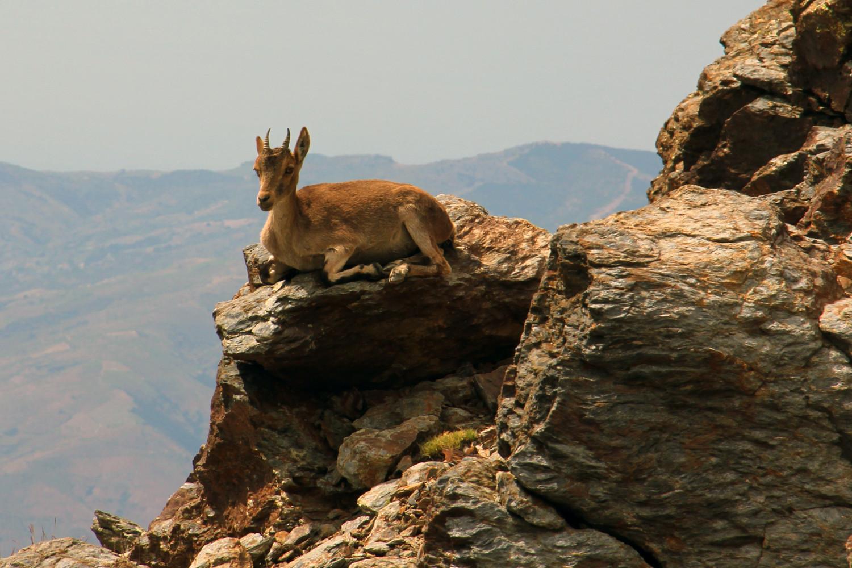 """Enyoing Sun"" - PN Sierra Nevada, Granada - WL04997"