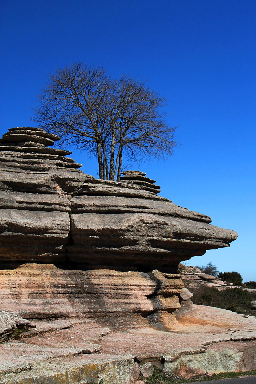 """Rock Tree"" - PN Torcal, Malaga - DR00208"