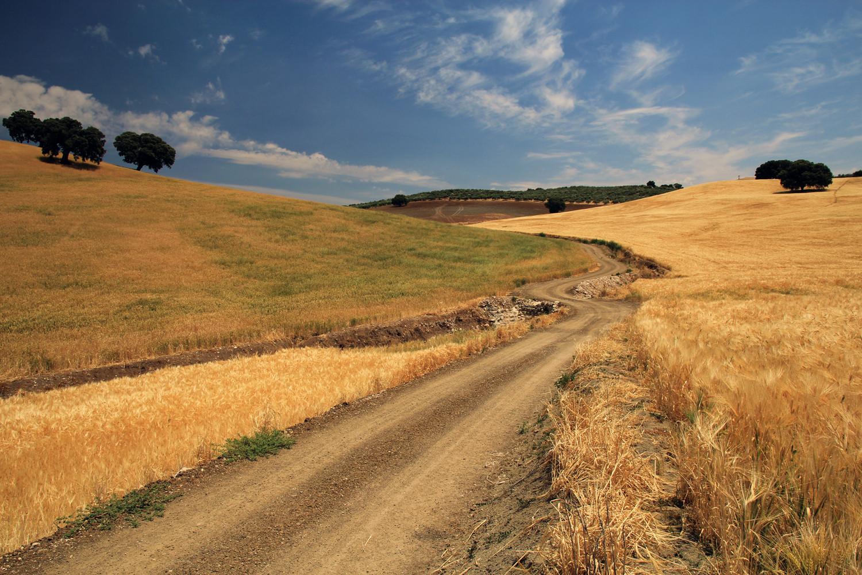 """""""The Dirt Road"""" - Monte Frio, Granada - LS01312"""