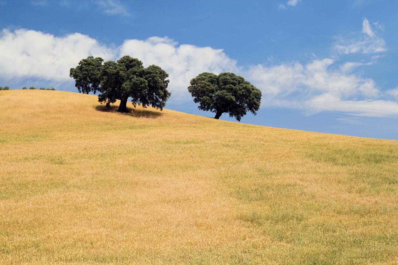 """""""The Three Trees"""" - Montefrio, Granada - LS01315"""