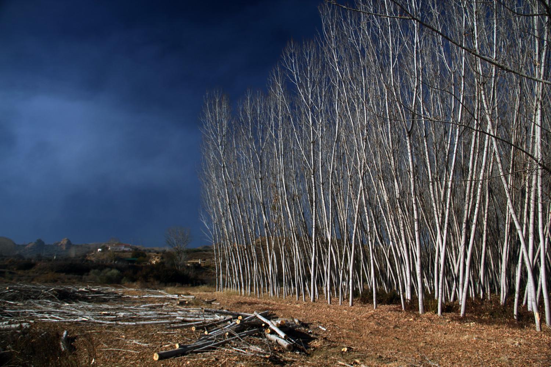 """""""The Woods"""" - Marquesado de Zenete, Granada - LS04384"""