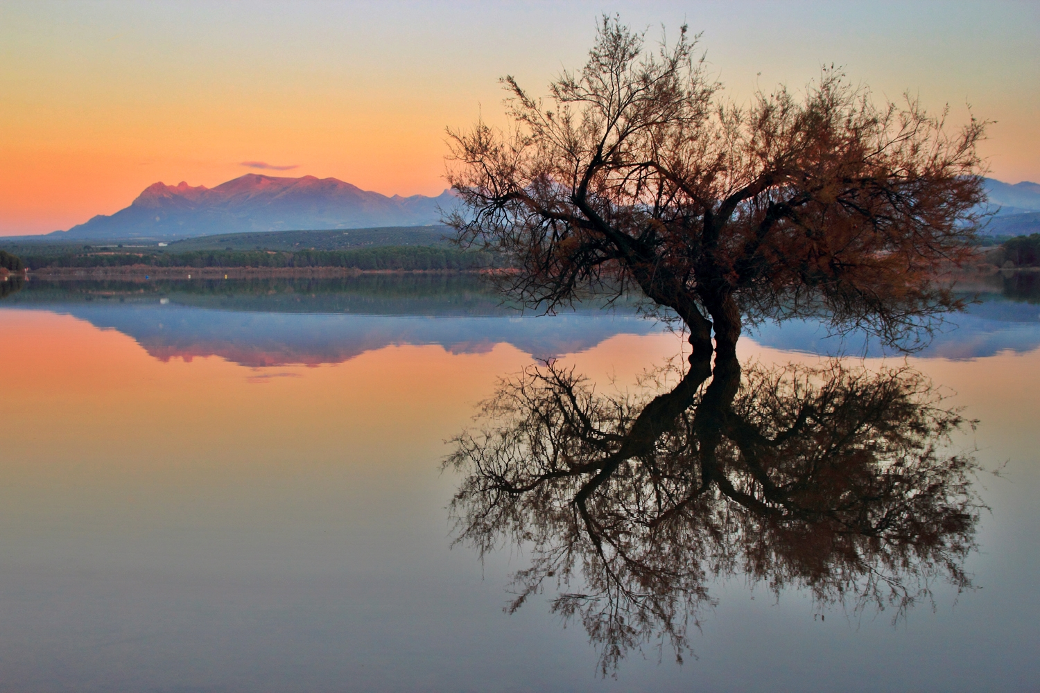 """The Water Tree"" - Pantano de Cubillas, Granada - L04538"