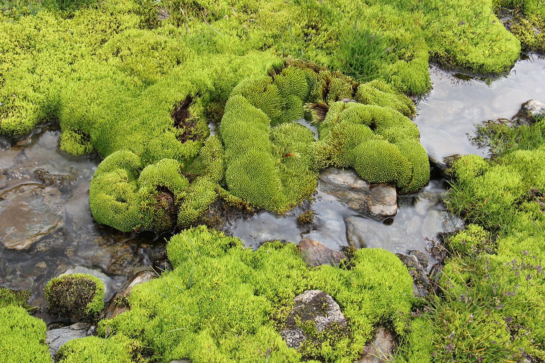 """""""Green"""" - PN Sierra Nevada, Granada - FF05232"""