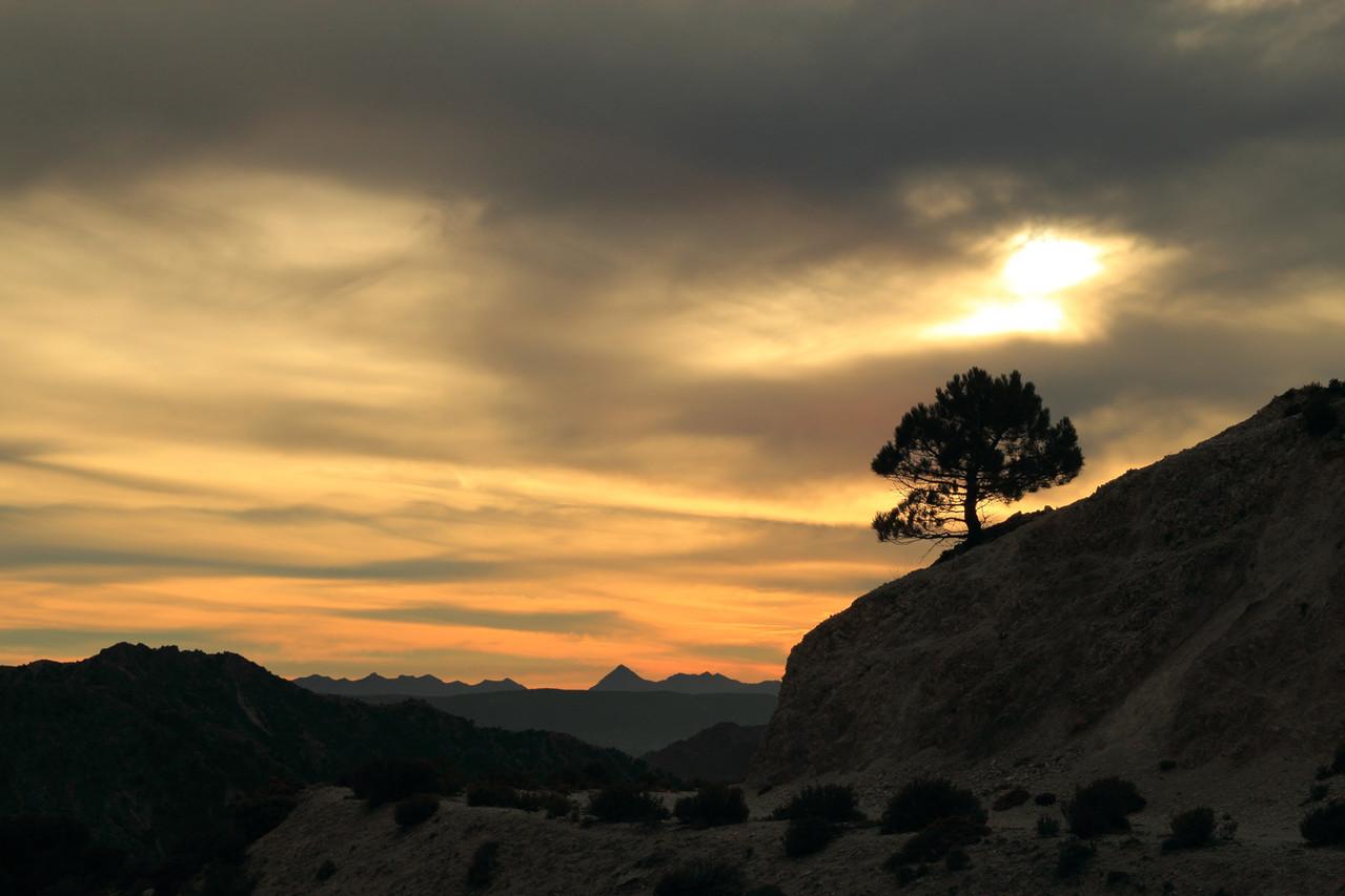 """""""Late Evening Tree"""" - PN Sierra Nevada, Granada - LS02949"""