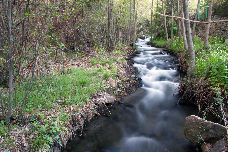 """Green Bush"" - Marquesado de Zenete, PN Sierra Nevada, Granada - R06819"