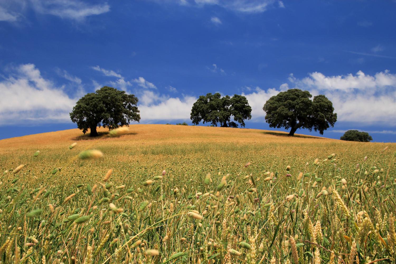 """The Three Trees"" - Monte Frio, Granada - LS01321"