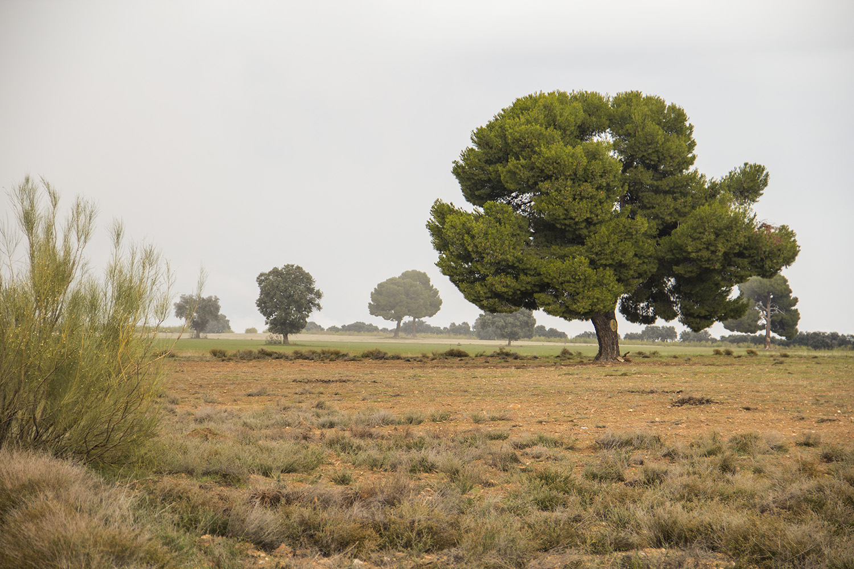 """The Tree""- Gorafe, Granada - LS03168"