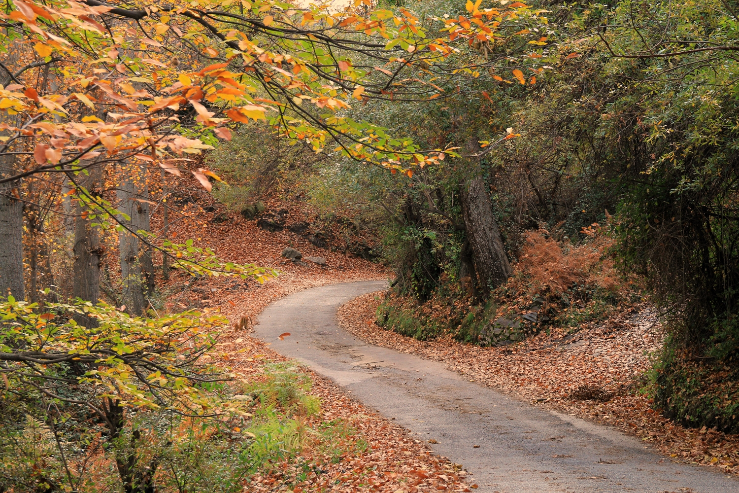 """Autumn Road"" -  Capilerilla - LS08150"