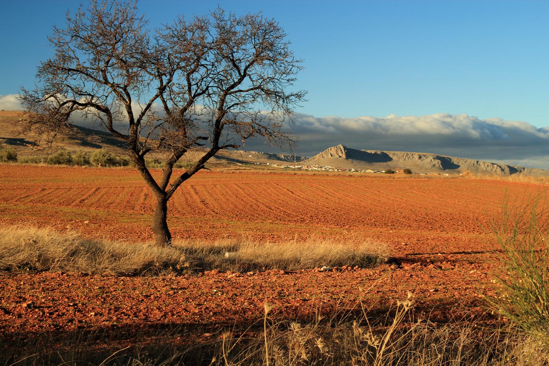 """""""Redlands"""" - Guadix, Granada - LS04612"""