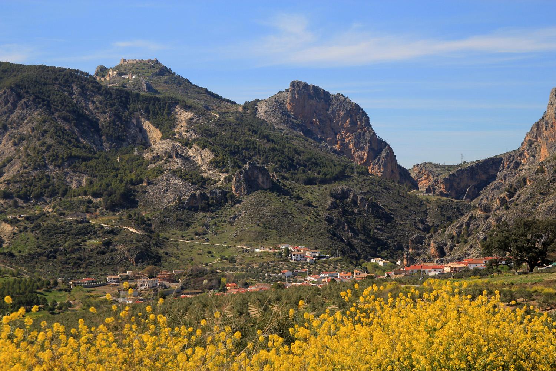 """""""Olivares"""" - Moclin, Granada - LS06660"""