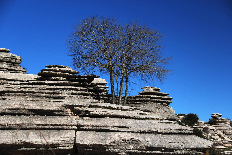 """Rock Tree"" - PN Torcal, Malaga - DR00203"